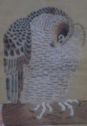Taka falconry art 1750